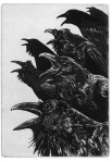 birds12